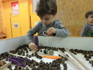 Un nen amb unes pinces a la mà agafant un fruit d'eucaliptus